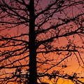 Late Autumn Sunset by Denise Irving