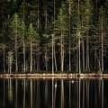 Late Loons by Jouko Lehto