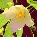 Late Spring Flower by Glenn Wilson Boerstler II