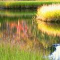 Stillness Of Late Summer Marsh  by Sybil Staples