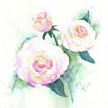 Late Summer Roses by Marsha Karle