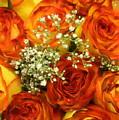 Late Summer Roses by Dora Sofia Caputo Photographic Design and Fine Art