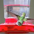 Later Hummingbird by David Stasiak