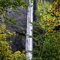 Latourell Falls by Albert Seger