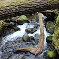 Laughingwater Creek Under Log by LKB Art and Photography