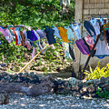 Laundry Drying In The Wind by James BO Insogna