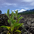 Lava And Villa Rica Volcano by Dant� Fenolio