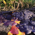 Lava Flow And Palms by Ron Dahlquist - Printscapes