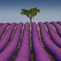 Lavander Field Luberon by Stephane Grossin