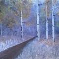 Lavendar Birch  by Sheli Paez