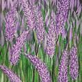 Lavender Blooms by Richard Drake