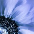 Lavender Blue Silk by Mona Stut