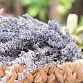 Lavender Calm  by Jessica Ruscello