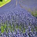 Lavender Dreams by Bonnita Moaby