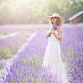 Lavender Dreams by Evelina Kremsdorf