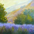 Lavender Field by Carolyn Jarvis