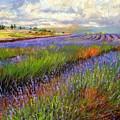 Lavender Field by David Stribbling