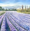 Lavender Field by Michiko Taylor