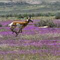 Lavender Fields by Jim Garrison