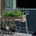 Lavender Flower Cart In Montmarte Paris by Carol Ailles