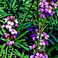 Verbena At Pilgrim Place In Claremont-california   by Ruth Hager