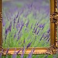 Lavender Frame by Rick Takagi