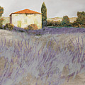Lavender by Guido Borelli
