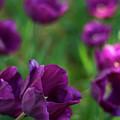 Lavender by Jordan Neal