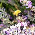 Lavender Landing by Will Borden
