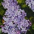 Lavender Lilacs by Helen Shideler