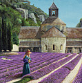 Lavender Picker - Abbaye Senanque - Provence by Trevor Neal