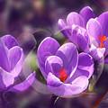 Lavender Spring by Jutta Maria Pusl