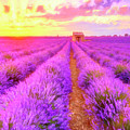 Lavender Sunrise by Dominic Piperata