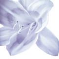 Lavender Tropic by Heather Joyce Morrill