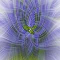 Lavender Twirl by Elaine Teague