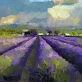Lavenders Of South by Dragica Micki Fortuna