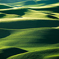 Layers Of Green by Todd Klassy
