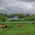 Lazy Afternoon In The Country by Eleanor Bortnick