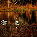 Lazy Autumn Afternoon  by Dave Bosse