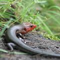 Lazy Lizard by Lisa Stanley