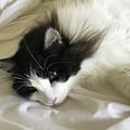 Lazy Morning by Karen Zuk Rosenblatt