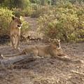 Lazy Samburu Afternoon by Rhoda Gerig