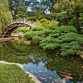 Lead The Way - The Beautiful Japanese Gardens At The Huntington Library With Koi Swimming. by Jamie Pham
