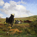 Leader Of The Herd by Auguste Bonheur