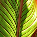 Leaf Abstract  23 by Sarah Loft