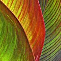 Leaf Abstract 3 by Sarah Loft