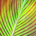 Leaf Abstract by Christina Rollo