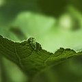 Leaf Abstract by Svetlana Sewell