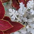 Leaf by Arundhati Shenoy