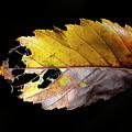 Leaf by Bibzie Priori